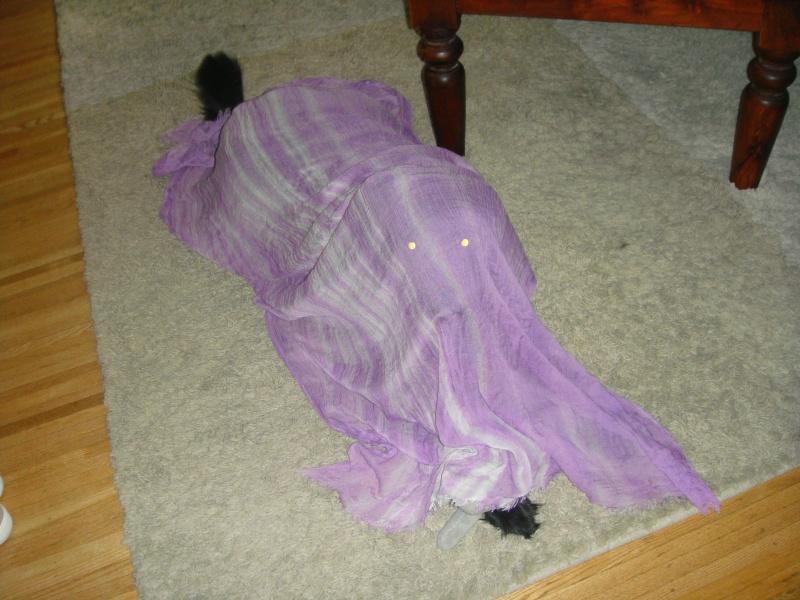 Bonus picture: Guess which mild-mannered dog is hidden under my new scarf?