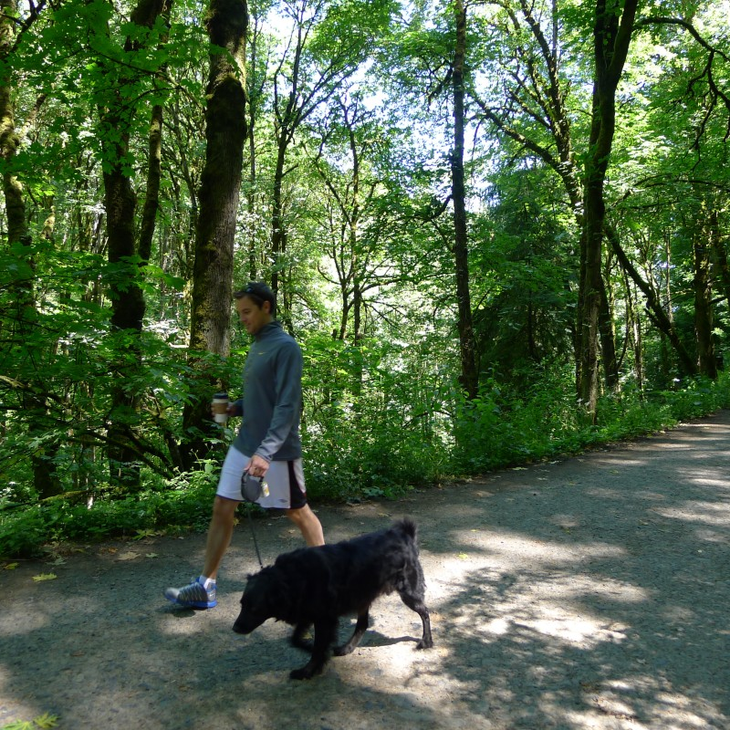Hiking the Leif Erickson Trail in Forest Park