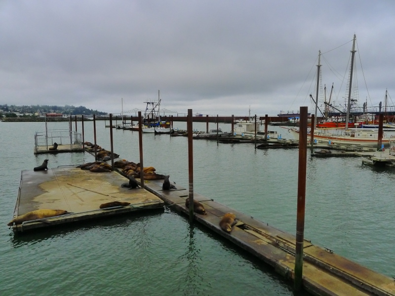 Seals and sea lions galore on the docks in Astoria
