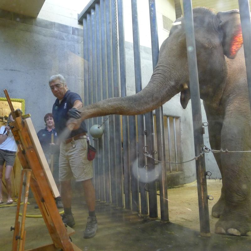 Rama the elephant painting a picture by spraying paint (shown) and using a paintbrush