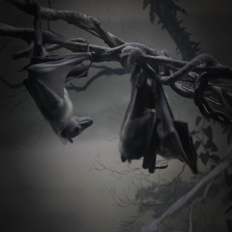 Bats! Creepers.
