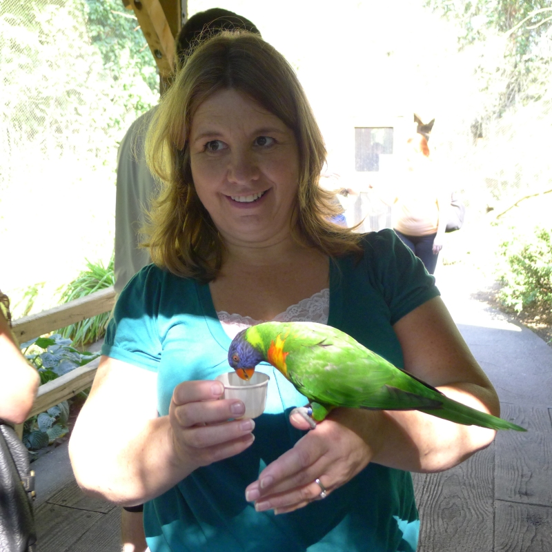 Mom feeding those greedy Lorikeets