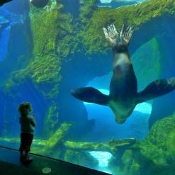 Amazing aquarium creatures!