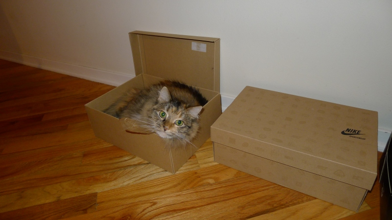 "Our cute little ""niece"" Sookie (who only sleeps in Nike and Cole Haan boxes)"