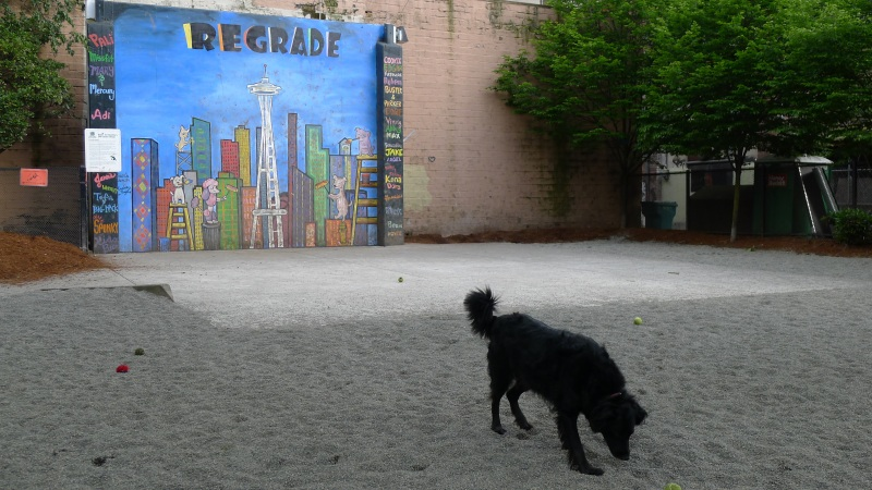 First thing we stumbled across: Regrade Dog Park, a few blocks from the hotel