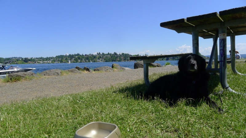 Taking a rest along Union Bay