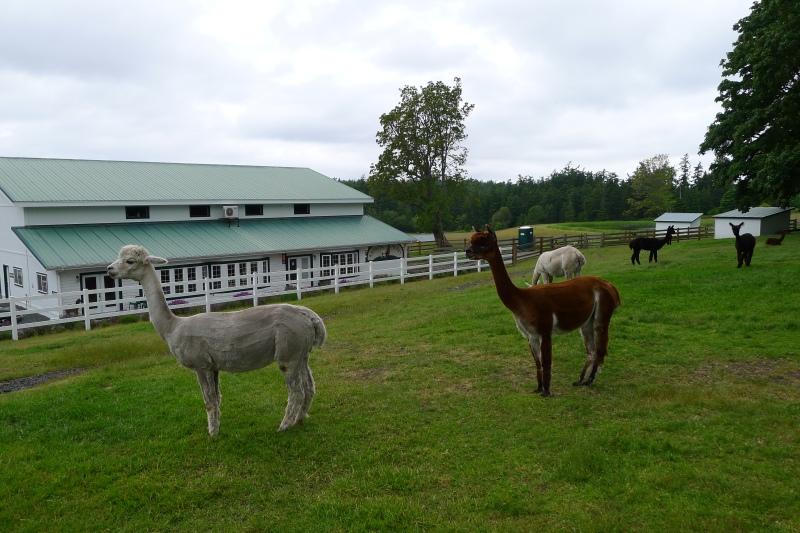 Krystal Acres Alpaca Farm