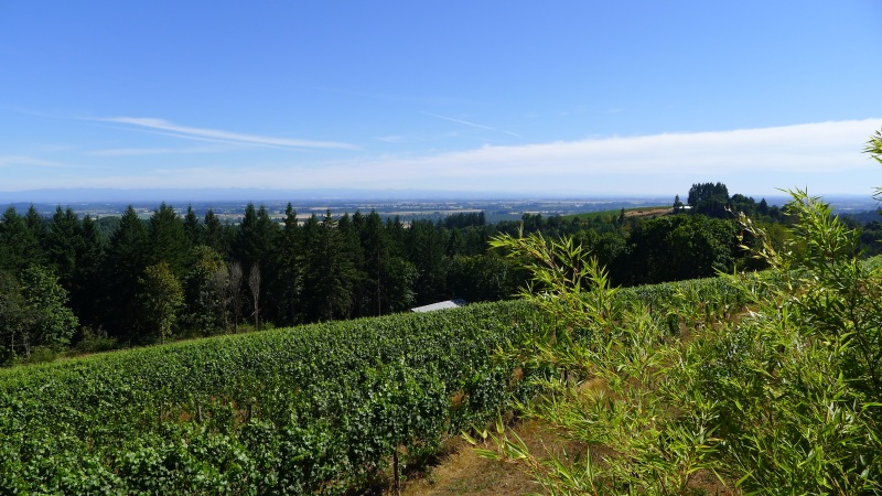 The vineyards surrounding Torii Mor Winery
