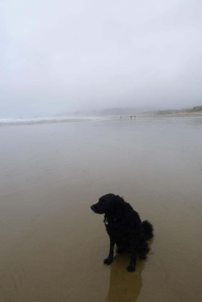 Cooper chillin' on Cannon Beach