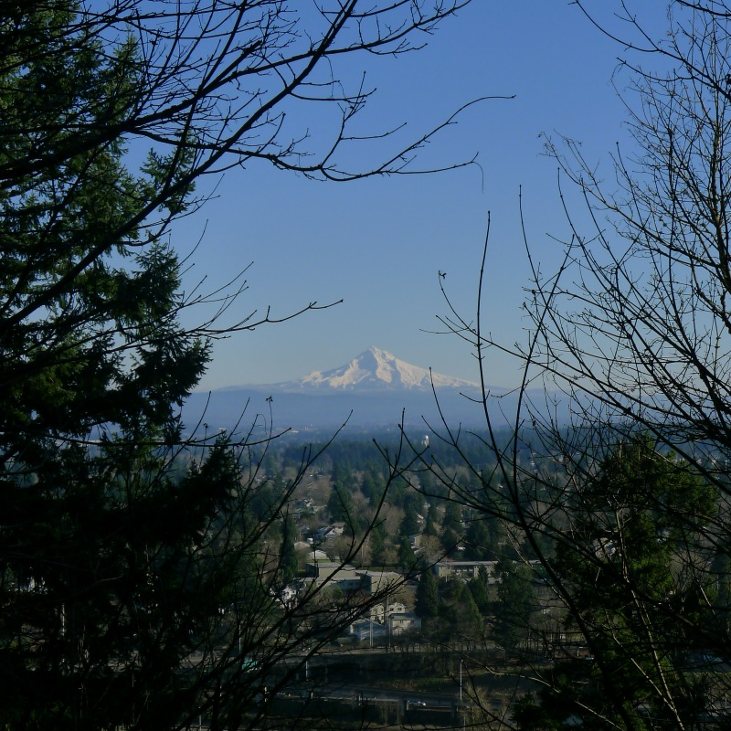 Mt. Hood view on our way to the Rocky Butte Hike summit