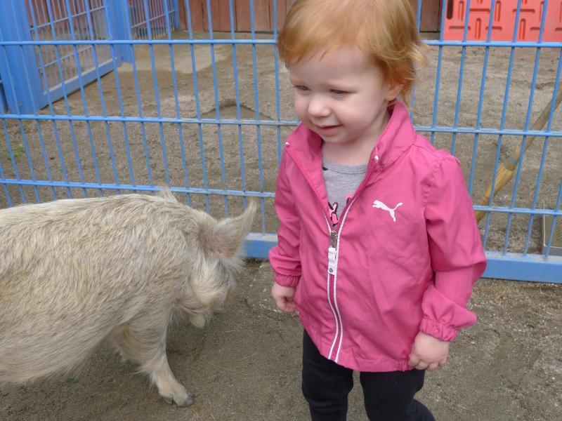 Macy loving the petting zoo in Animal Kingdom