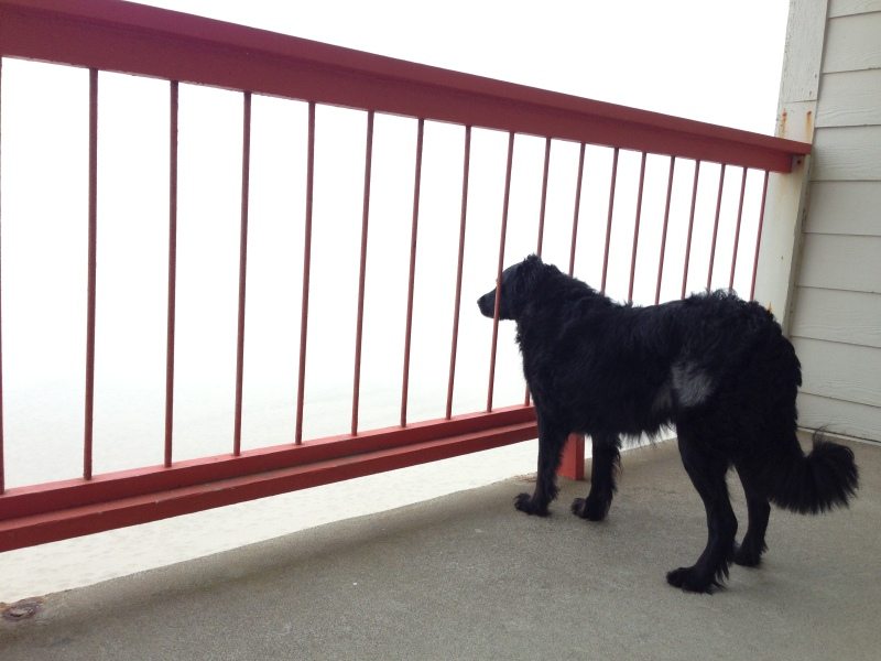 Cooper watching Jeff run down the foggy beach Sunday morning