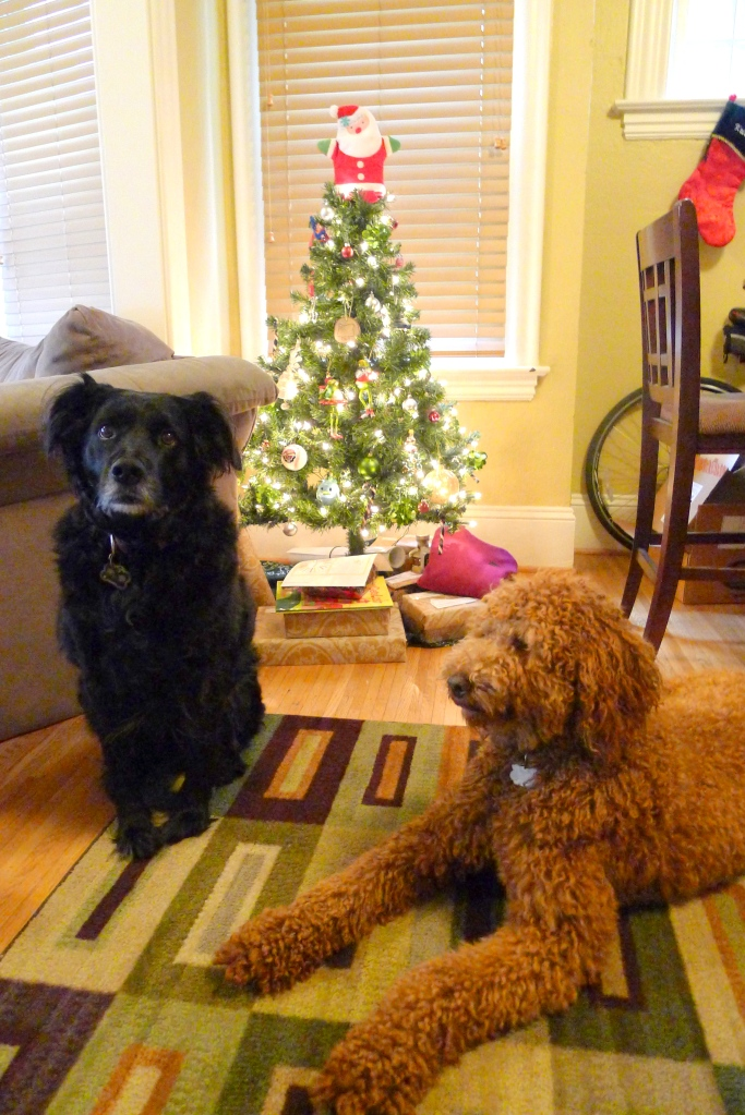 Cooper and his buddy Giggs pose in front of our tiny tree