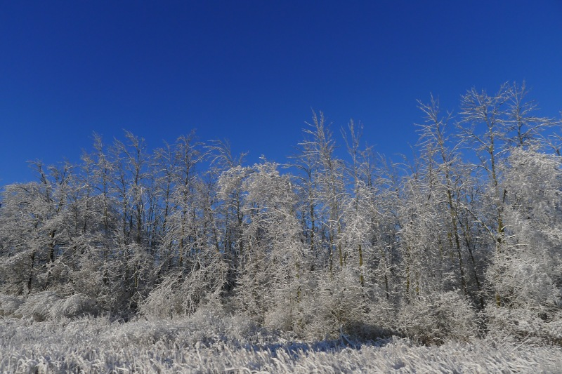 The beautiful ice-encrusted trees along I-75 near Flint