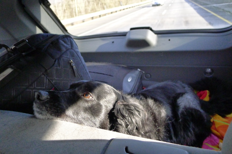 Cooper enjoying the ride to Bend