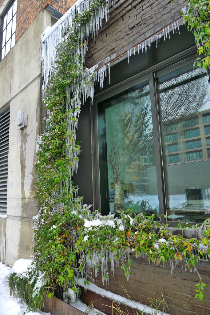 The ice can't muffle Portland's bright greens