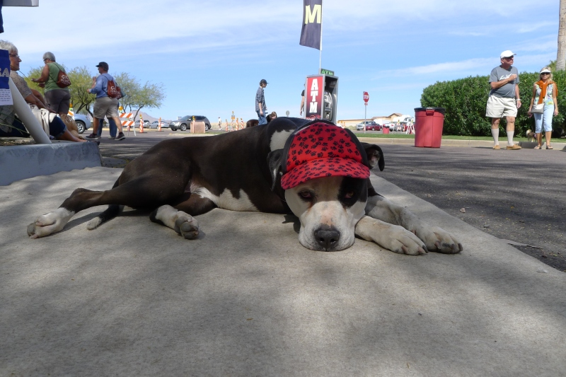 The enthusiastic mascot for the dog hat booth at the Great Fair